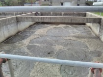 Aerated ponds