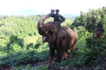 Mahout with Mae
